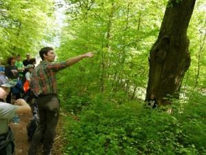 Den Wald mit anderen Augen sehen